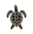 sea turtle icon vector image