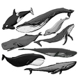 set hand drawn whales vector image vector image