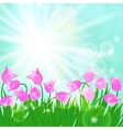 Spring card background with sun and tulips vector image vector image