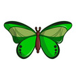 butterfly great mormon icon cartoon style vector image