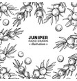 juniper drawing frame isolated vintage vector image vector image