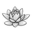 nymphaea water lily flower sketch engraving vector image vector image