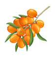 realistic 3d detailed orange sea buckthorn berries vector image vector image