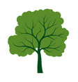 shape tree with green leaves outline plant in vector image vector image