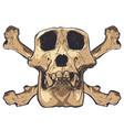 a monkey skull on background vector image