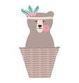 bear grizzly with feathers hat in basket straw vector image vector image
