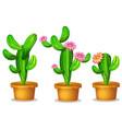 cactus in plant pot vector image