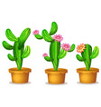 cactus in the plant pot vector image