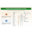 human endocannabinoid system horizontal textbook vector image vector image