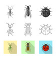 isolated object of insect and fly sign set of vector image vector image
