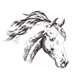 freehand sketch of horse head isolated on white vector image
