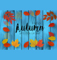 autumn sale background with colorful leaves on a vector image