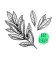 bay leaves set