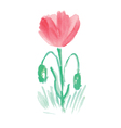 Handwritten watercolor flower vector image vector image