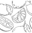 lemon fruit pattern on white background vector image