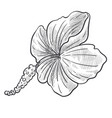 wild flower hibiscus plant isolated sketch vector image