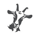 black goat face stylized symbol agriculture vector image vector image