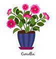 camellia plant in pot vector image