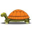 Cartoon turtle vector image