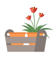 flowers in pot blooming season plant vector image vector image