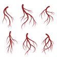 human veins red blood vessels realistic vector image vector image