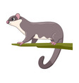 sugar glider animal standing on a white background vector image vector image