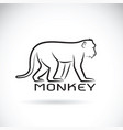 monkey on white background wild animal vector image vector image