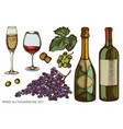 set hand drawn colored grapes champagne vector image