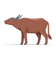 water buffalo animal standing on a white vector image