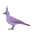 crested pigeon bird on a white background vector image vector image