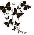 black butterflies pattern vector image
