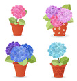 collection of hortensia planted in ceramic pots vector image vector image