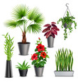 house plants realistic set vector image
