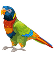 Lory Parrot vector image vector image