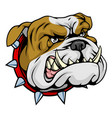 mean bulldog mascot vector image