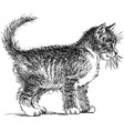 sketch a domestic kitten standing and watching vector image vector image