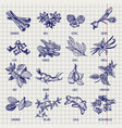 spices and herbs sketch collection vector image