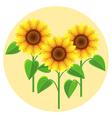 Decorative flowers sunflowers vector image vector image