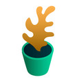 flower home pot icon isometric style vector image