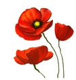 poppies hand drawn painted vector image