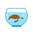Sea turtle in an aquarium Water animal Pet in vector image vector image