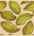 cardamom seeds pattern on color background vector image