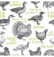 farm animals background vintage vector image