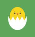 funny yellow newborn chicken in broken egg shell vector image vector image