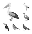 types of birds monochrome icons in set collection vector image vector image