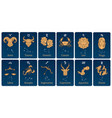 zodiac constellations and signs horoscope cards vector image