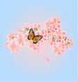 Butterfly and Cherry blossoms Spring background vector image vector image