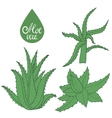 Collection of hand drawing aloe vector image vector image