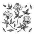 floral set with peony buds collection vector image