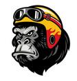 gorilla head wearing helmet vector image